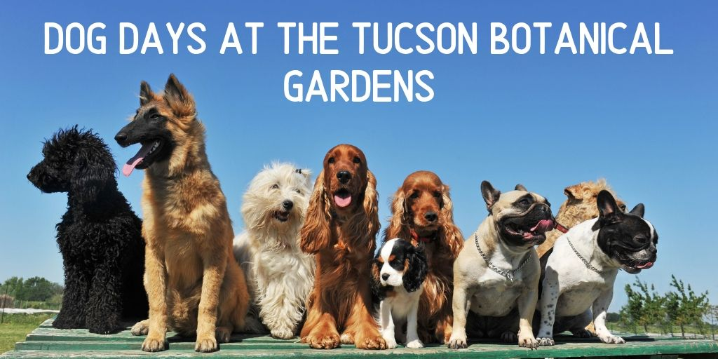 Get out of the house with your four legged best friend for Dog Days at the Tucson Botanical Gardens.From June 1st through September30th, your 4-legged friends will be allowed to enjoy the Gardens just as much as you.